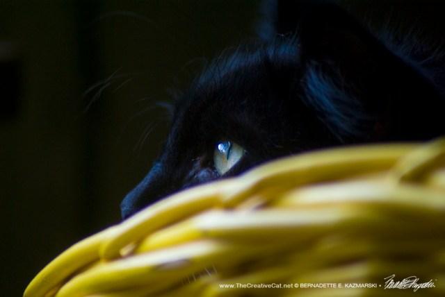 Appreciating Black Cats