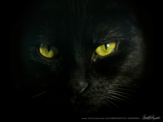 Giuseppe's Eyes