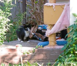 TNR project to remove stray and feral cats from an abandoned building to be demolished.