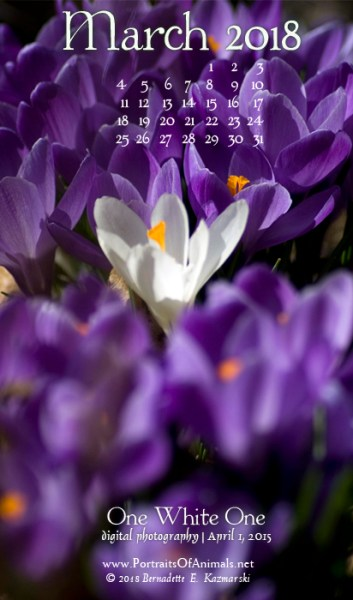 Desktop calendar, for 400 x 712 for mobile phones.