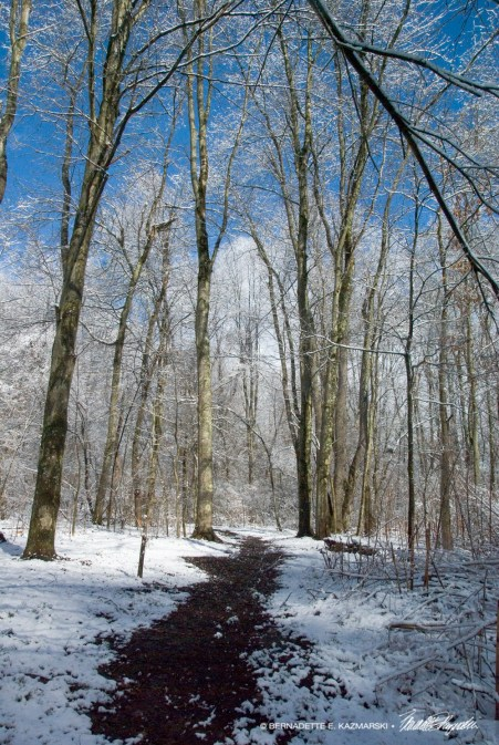 Trail36-1000px