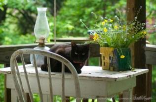 051715-Mimi-table-crouch