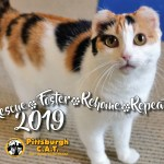 Rescue, Foster, Rehome, Repeat 2019: Pittsburgh C.A.T. 2019 Calendar