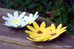 Decorative Dishes Inspired By Wildflowers