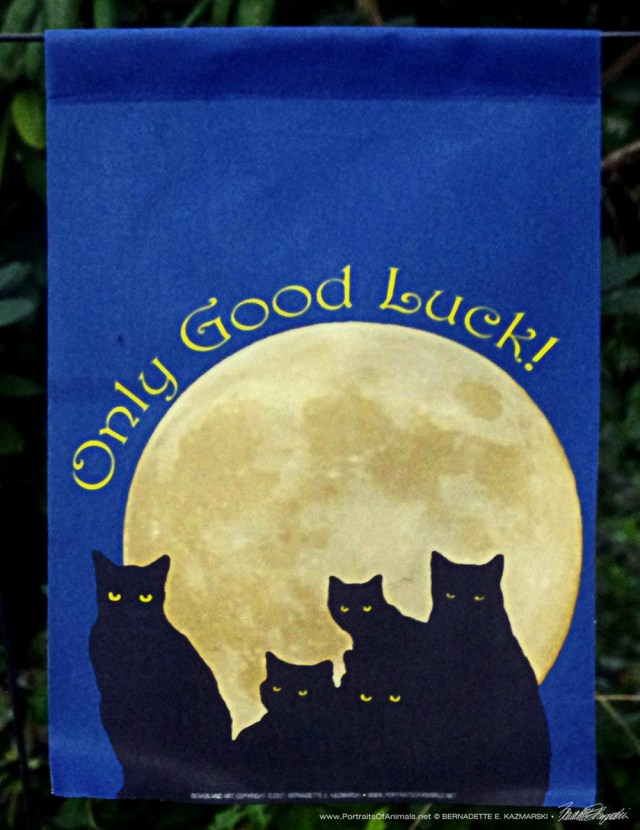 Only Good Luck black cat garden flag