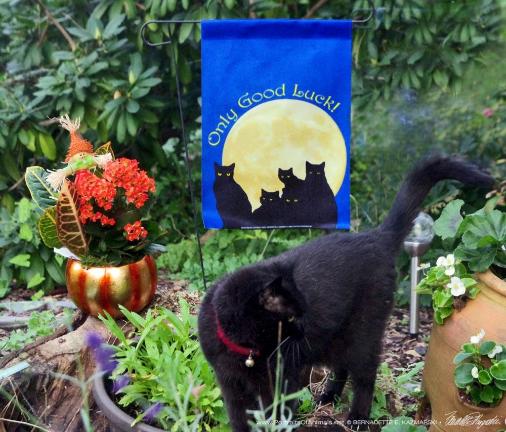 Mimi models the new garden flag.