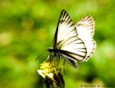 Portraits-of-my-Land-Nectar-of-flower-6