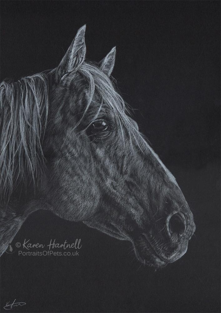 Americian Quarter Horse