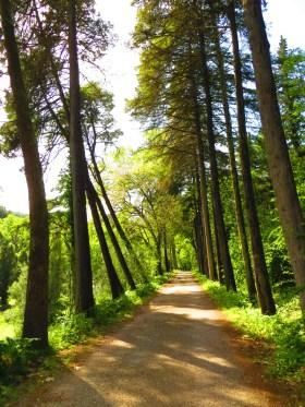 Sete Montes forest