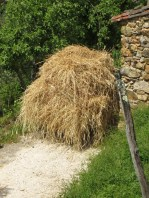 Everyone has been making hay . Under this pile of hay is a man driving a small blue van !
