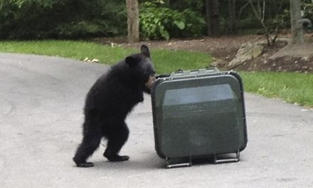 Outrage over killing of disabled bear