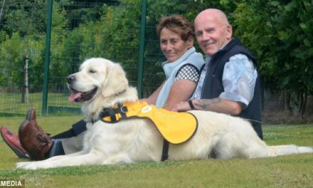 The 'dementia dogs' that get their owners out of bed, keep them active, and bring them their medication