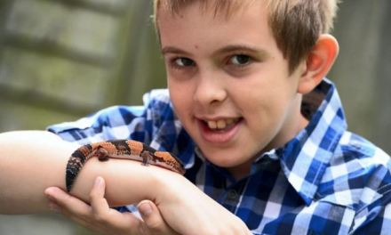 'As soon as he held him, he fell in love': Autistic boy's life is transformed by his new best friend…a pet lizard called Spike