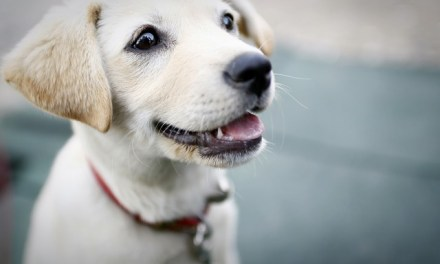 Childhood pets could help tackle asthma