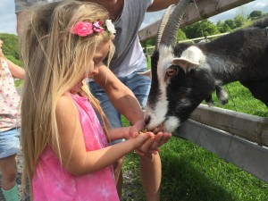 feed a goat