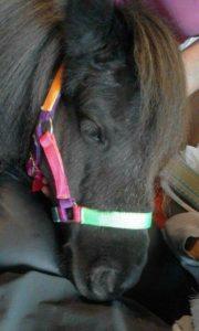 finavon-pony-visit