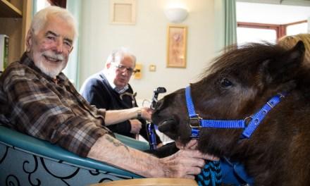 Miniature Ponies Make Massive Impact to Residents