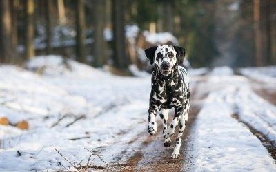 Keeping Dogs Warm in Winter