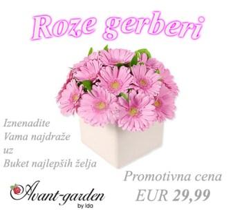 roze-gerberi-3