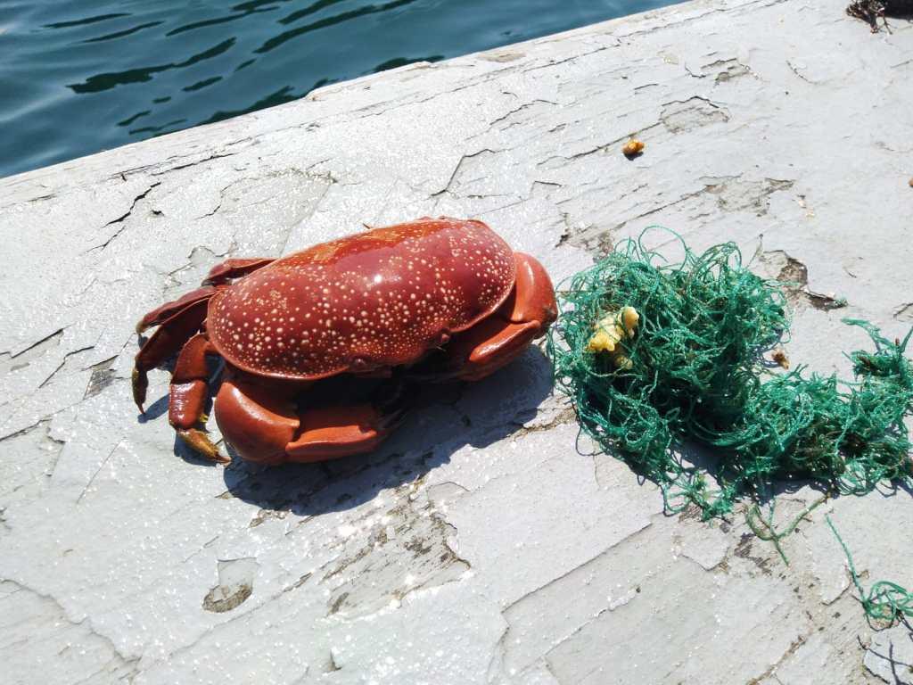 Sauvetage d'animaux marins