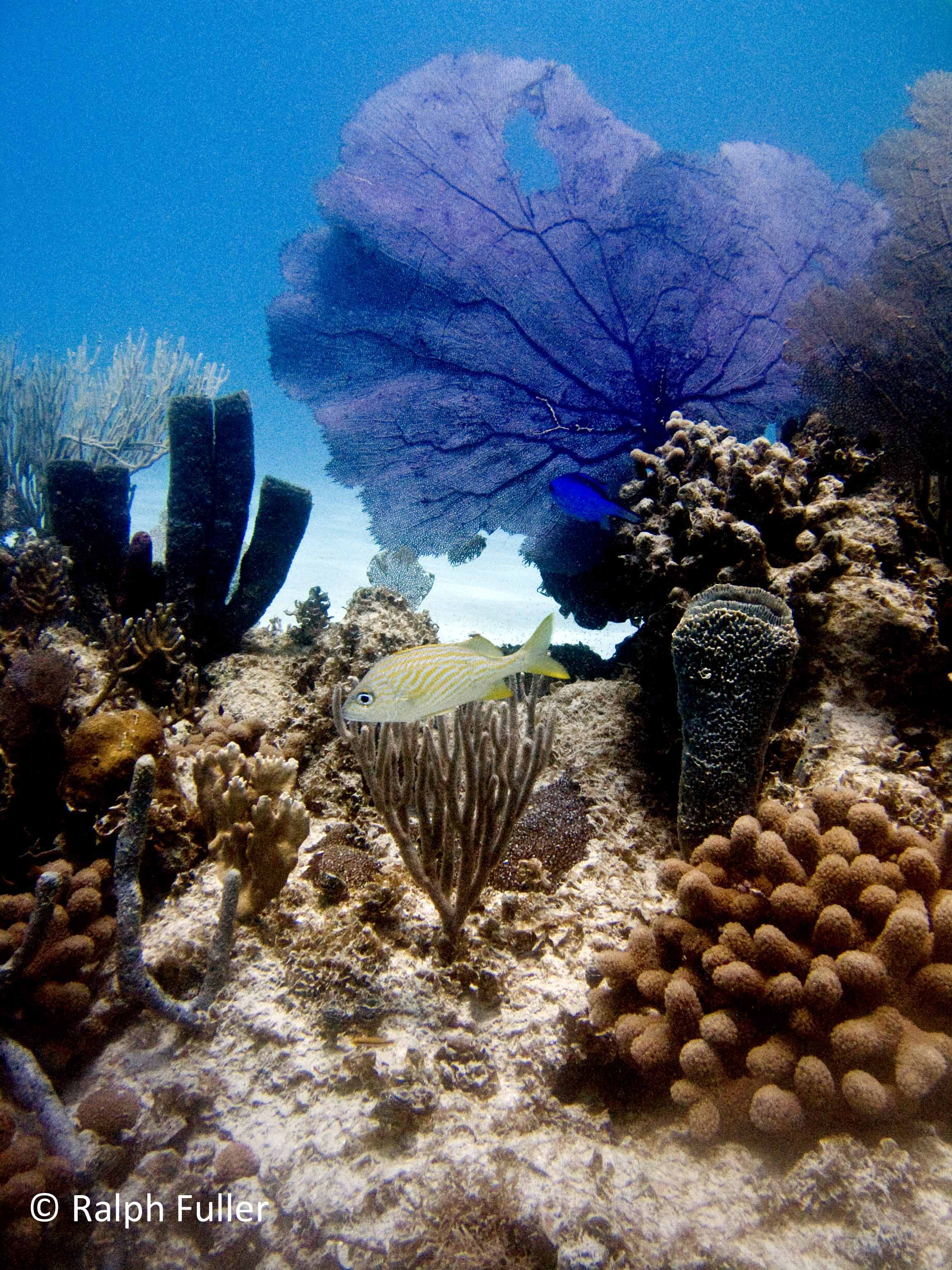 a2facfc9c076 Five Easy Resolutions for the Reef – Poseidon's Web