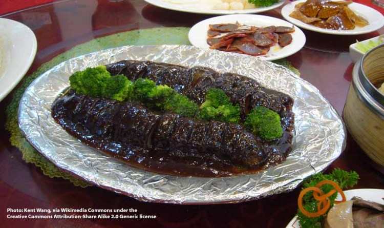 sea cucumbers as food