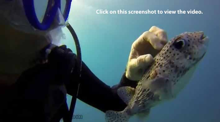 A video of a diver giving a great fish backscratch in Hawaii.