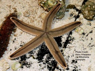 starfish walk