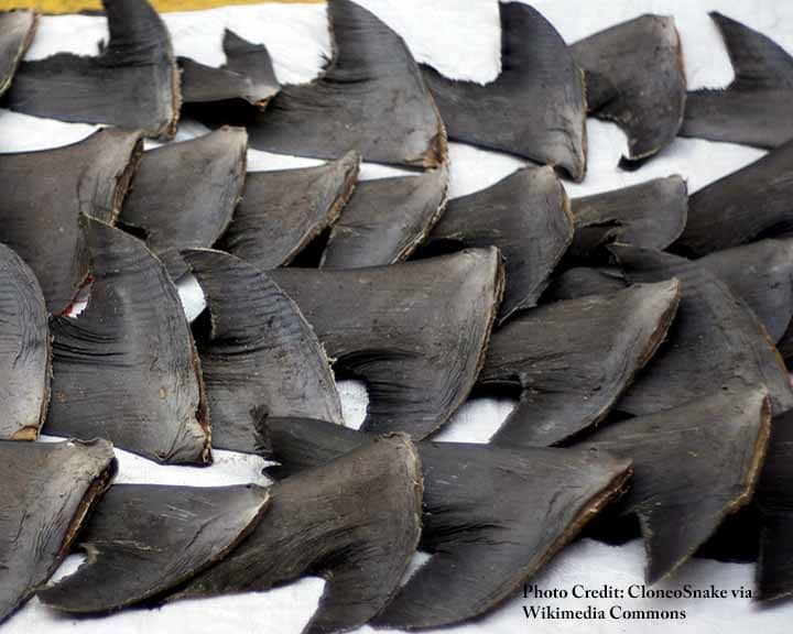 Severed shark fins on a sidewalk in Hong Kong