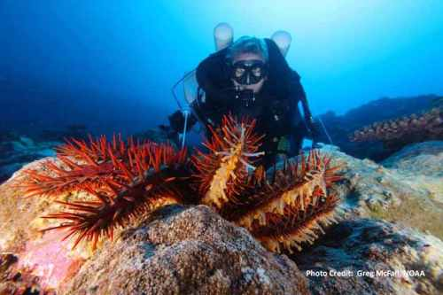 crown of thorns starfish - outbreak control