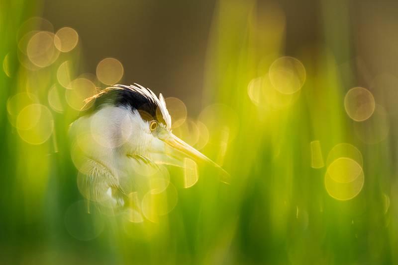 photo heron