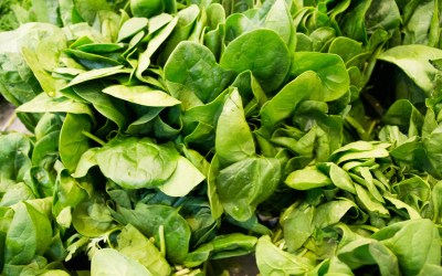 The Devil's Lettuce: How to have Fresh Greens in Winter