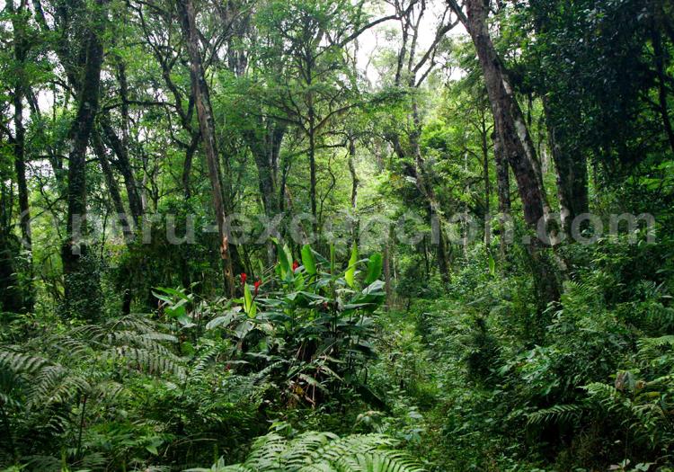 foret amazonienne