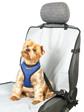 Dog Travel and Safety