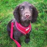 Airmesh Dog Harness In Red