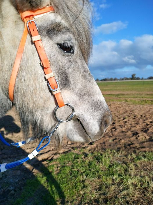 Cheekpieces holding up Browband