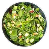 Healing Watercress Salad