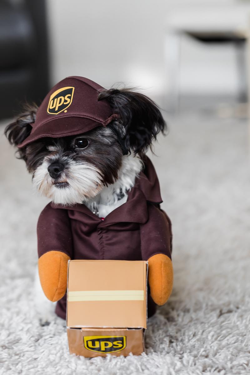 puppy halloween costume ideas, UPS