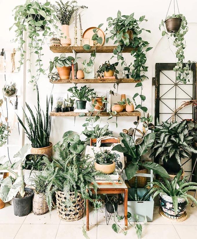 The Best 9 Indoor Hanging Plants Even A Beginner Won't