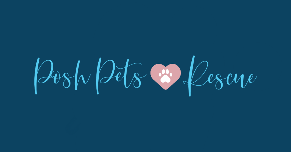 Adoptable Dogs - Posh Pets Rescue