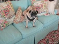 Outdoor Canvas pet-proof sofa