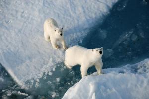 Конспект занятия по физическому развитию  для детей подготовительной к школе группы комбинированной направленности «Путешествие на Северный полюс»