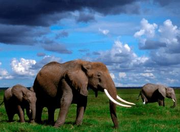 elephants rarely get cancer