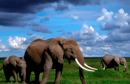 University of Utah study reveals elephants rarely get cancer!