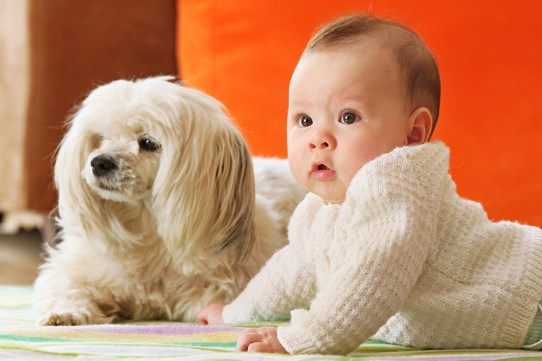 baby dog-related visual result