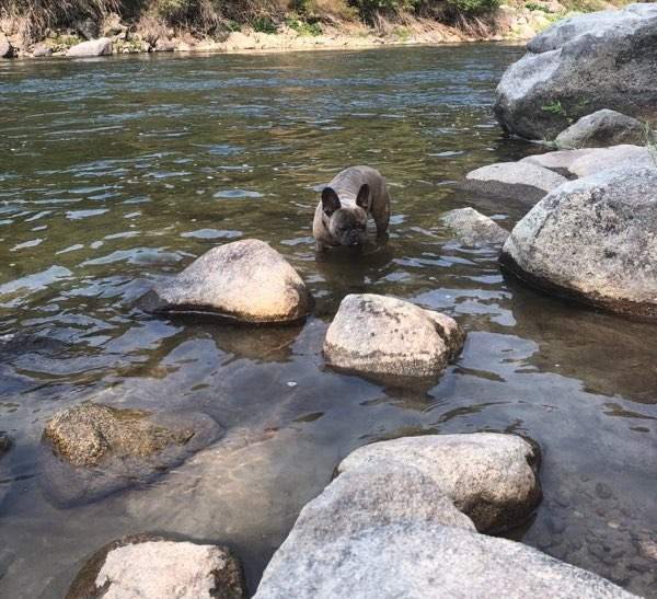 Basil dog