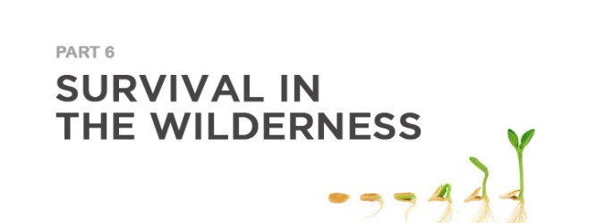 Survival in the Wilderness (6)