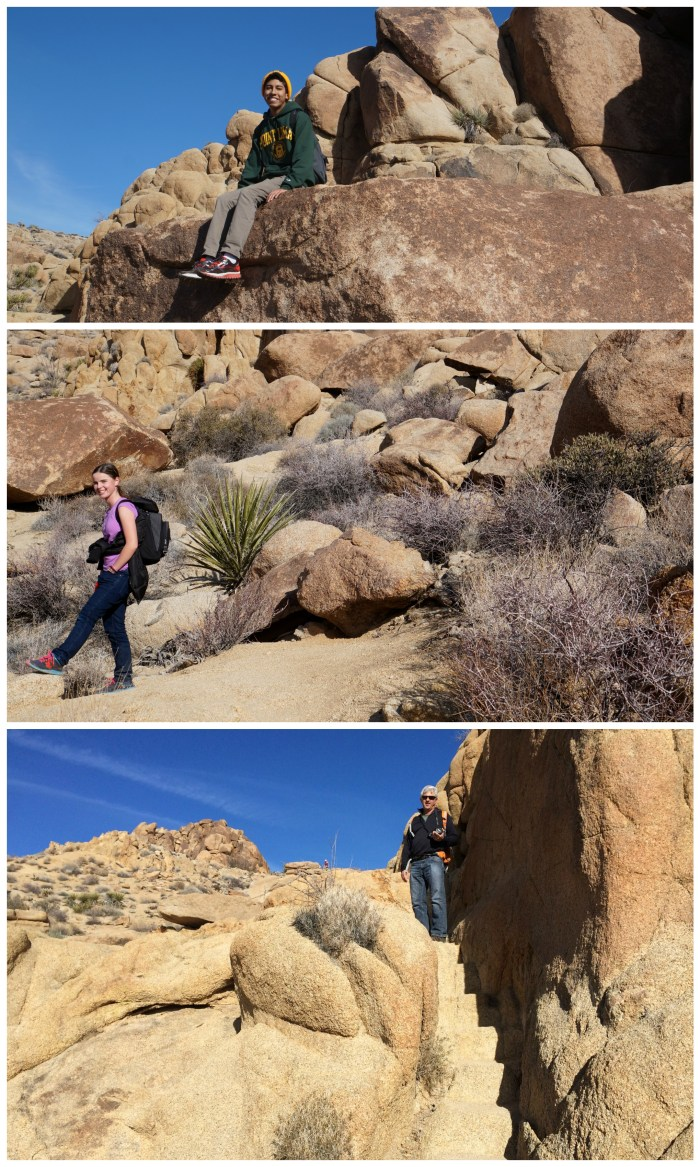 Joshua Tree National Park Collage
