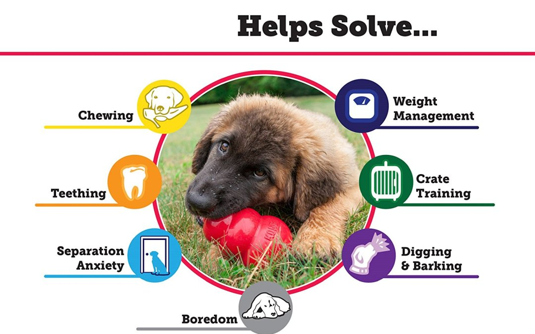 Kong 101: How to keep your pup busy!