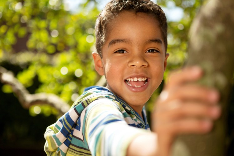 Hispanic little boy playing in a tree.